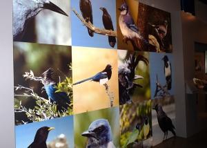 tentoonstelling museum full colour print